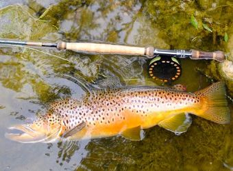 highlander trout spey rods